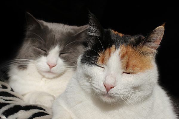 Neko and Meli